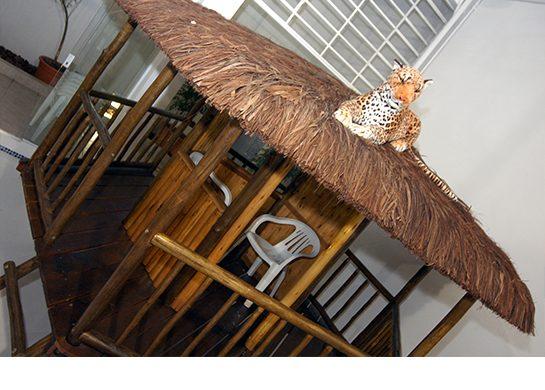 Casa do Tarzan, emoção na selva